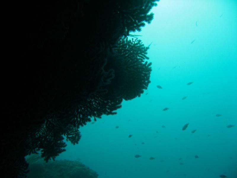 Ambiance sous l'eau