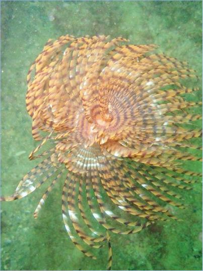 Spirographe